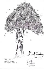 Pohon Kepel di Museum Sonobudoyo