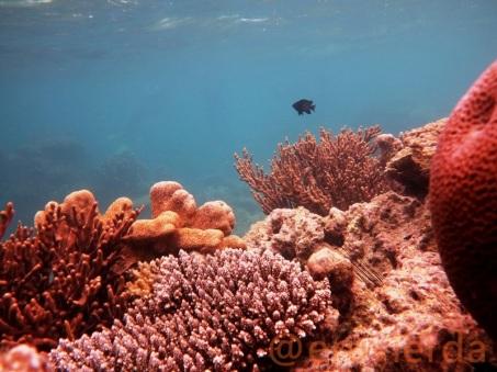 karimunjawa underwater